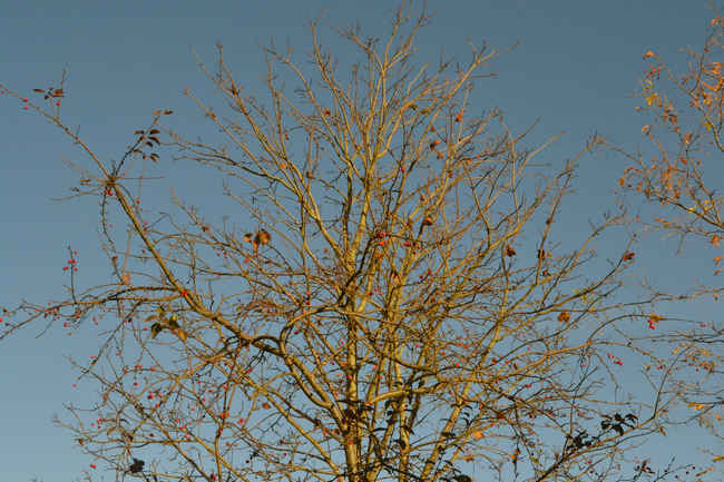Autumnal Memories