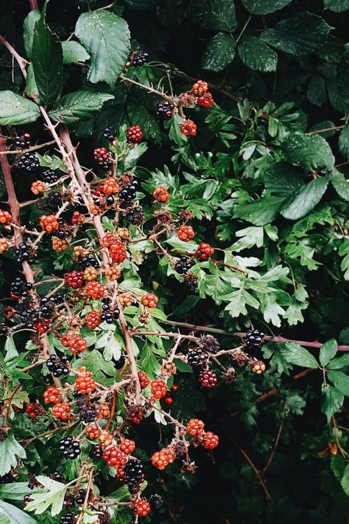Autumnal bedroom updates.
